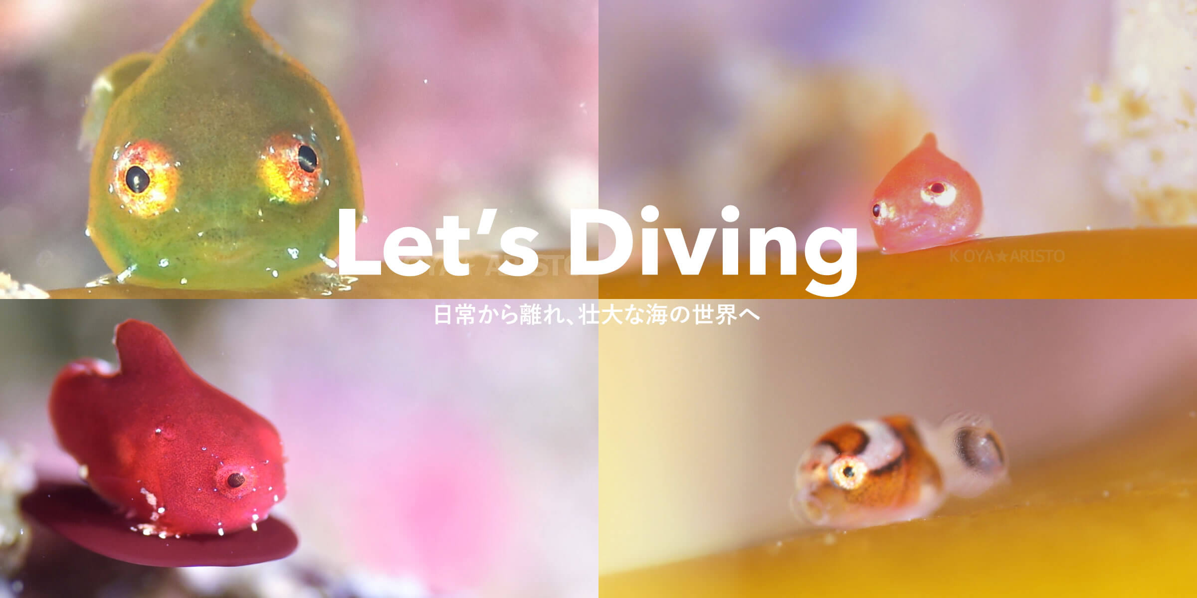 Let's Diving